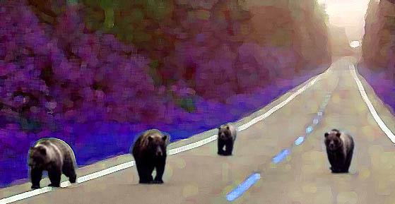 Ga eens praten met de beren op je weg